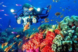 coral-diving